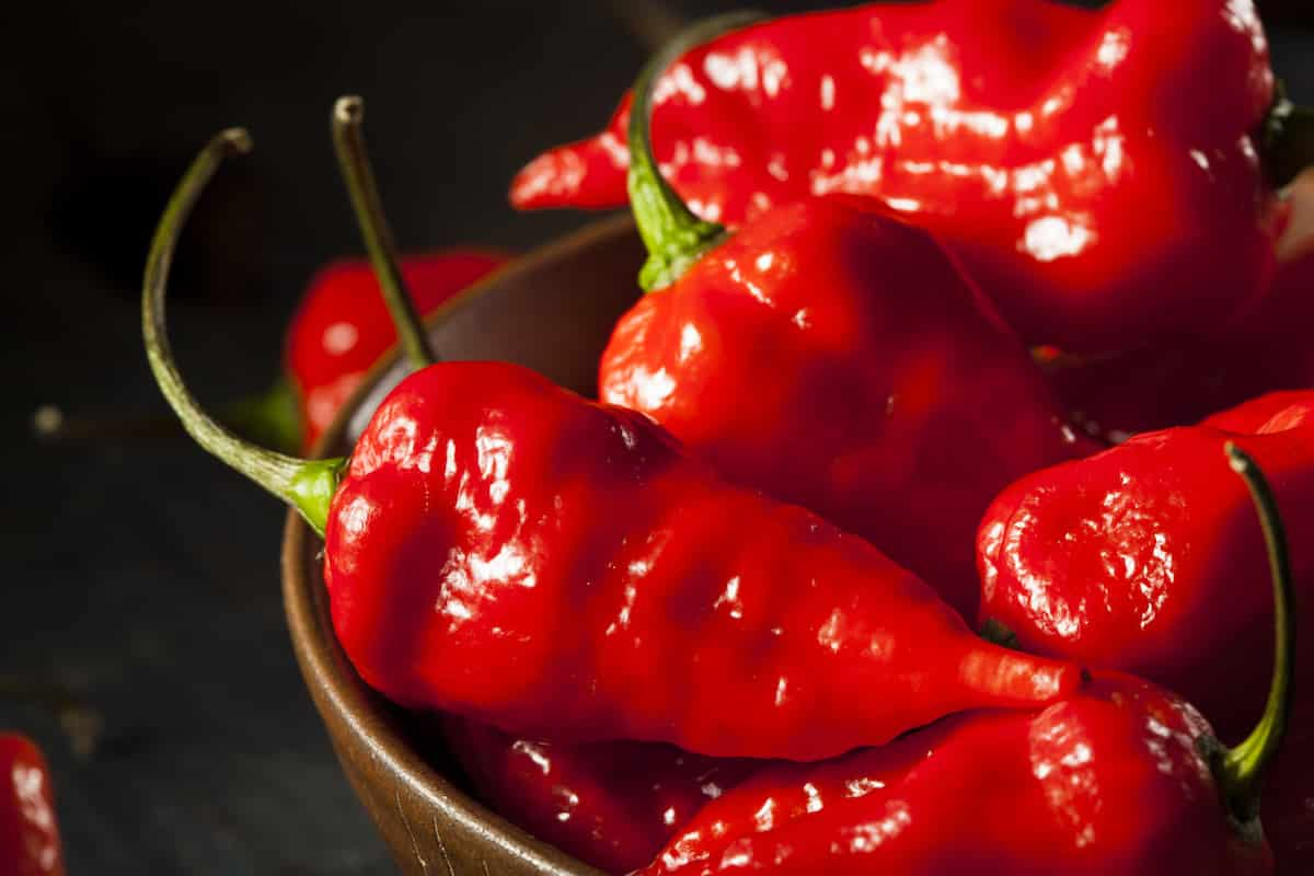 Hottest Peppers In The World 2019 Eating On The Edge Pepperscale