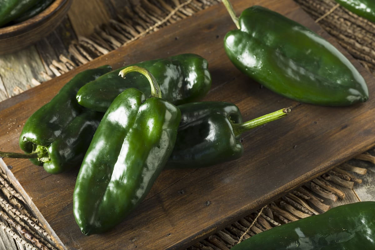 Poblano Peppers Mexico S Mild Chili