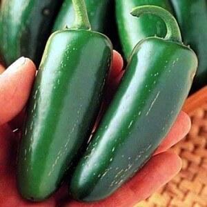 jalapeño pepper