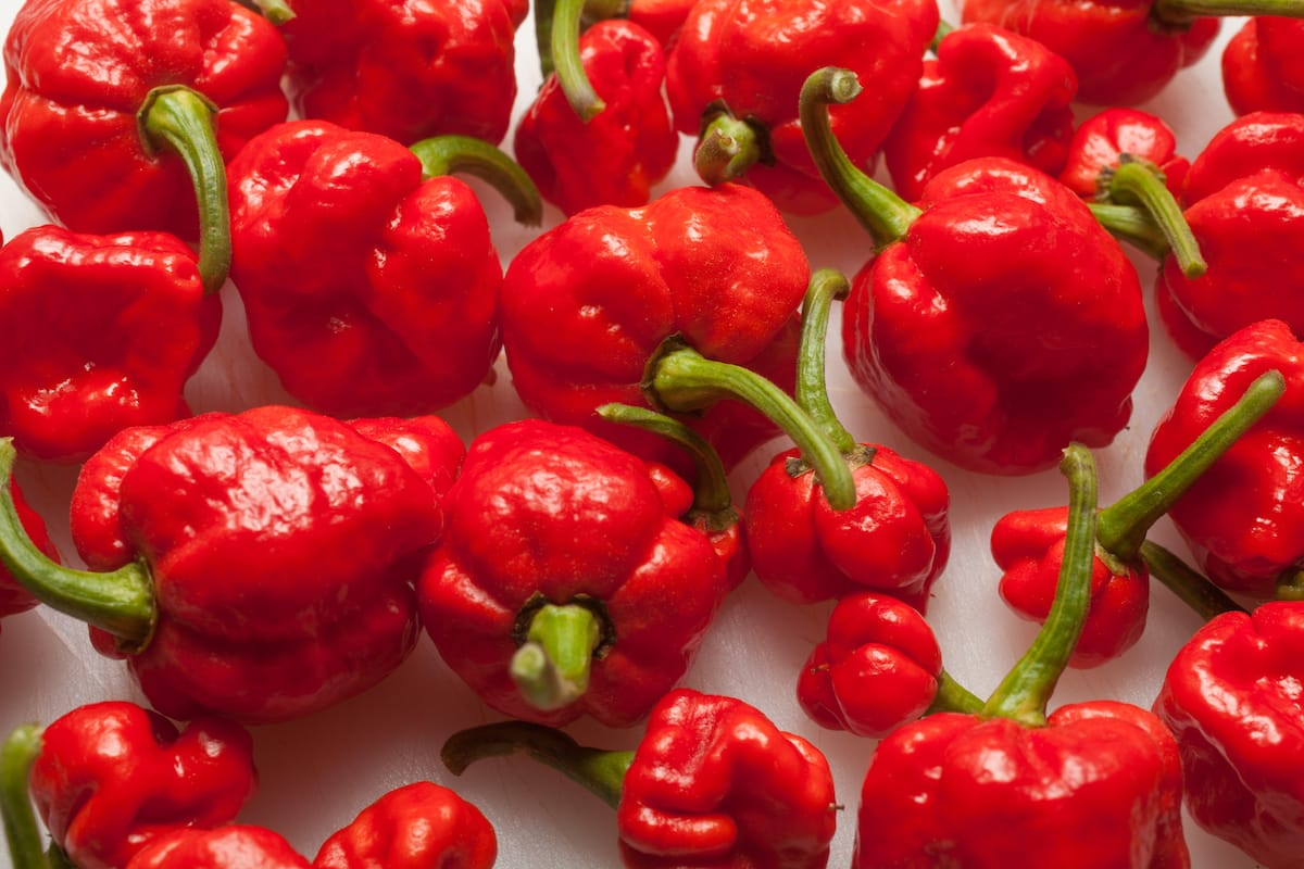 Trinidad Moruga Scorpion: Super Hot Sting