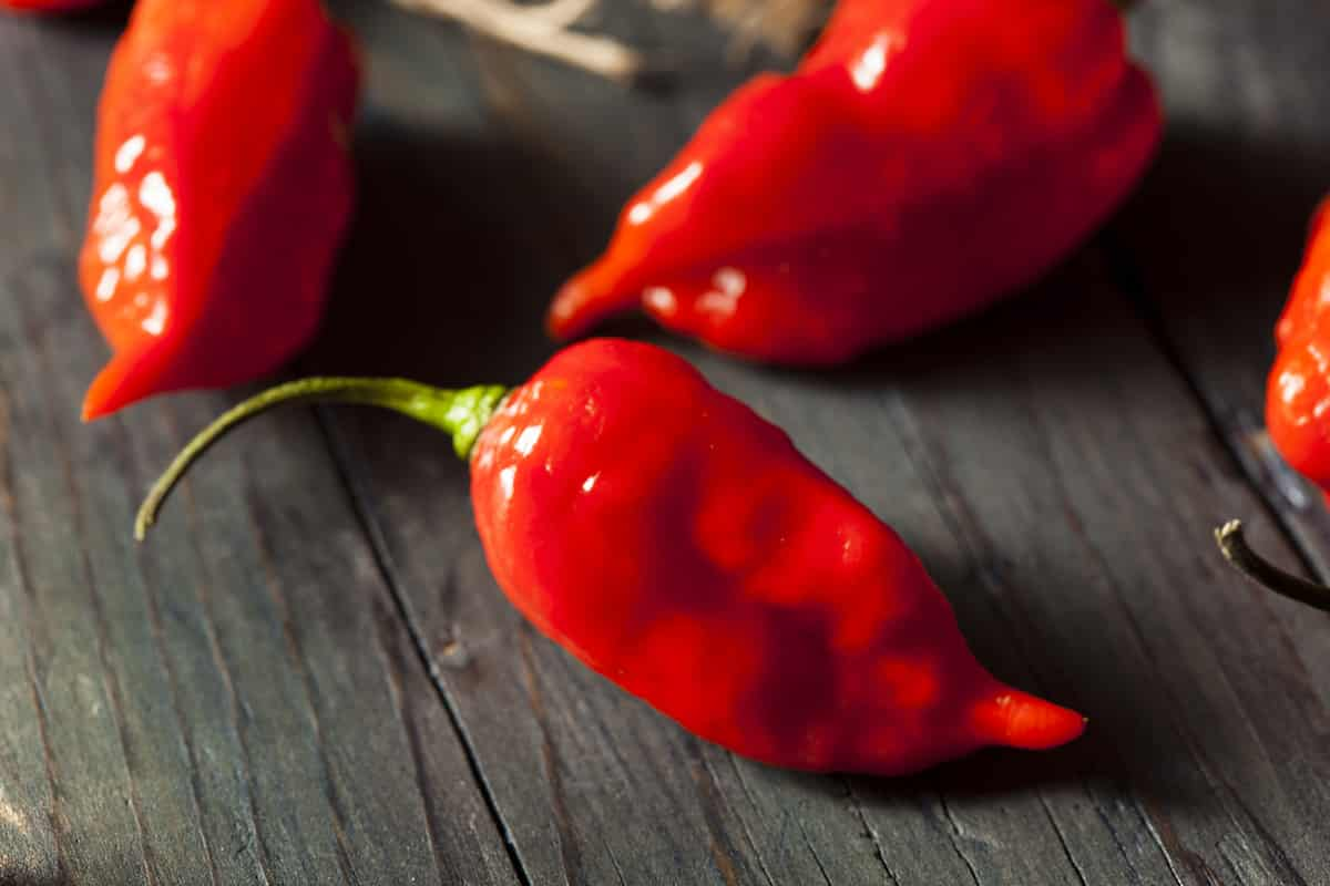 Ghost Pepper: A Fiery Pepper With A Hot Following