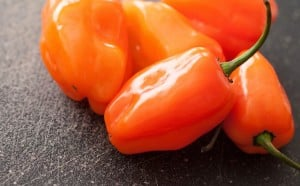 Habanero Pepper: Serious Heat And Serious Flavor