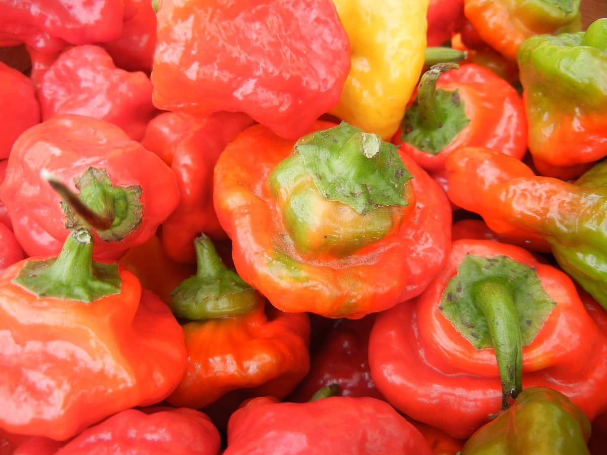 Rocotillo Pepper: A Mild Alternative To The Habanero