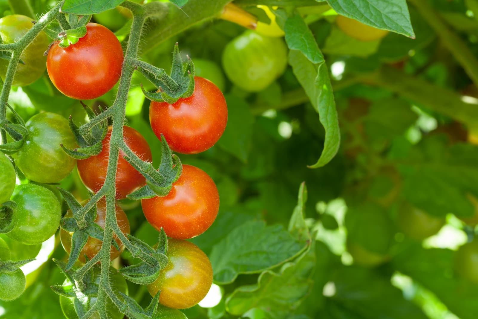 A Natural Bug Repellent For Your Garden: Hot Pepper Wax