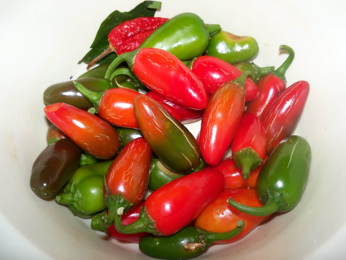 red jalapeno vs green jalapeno