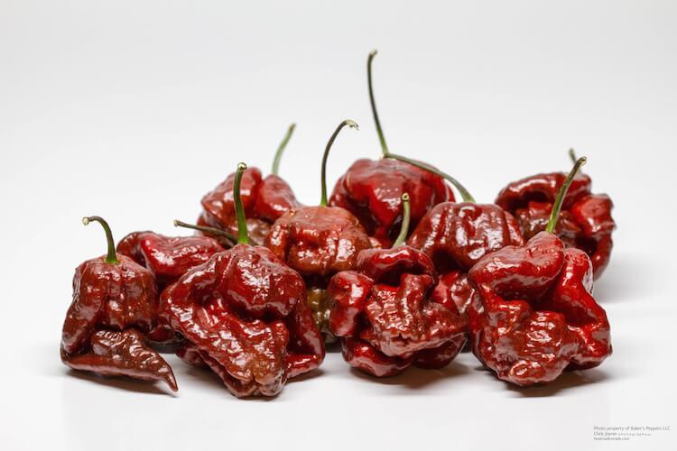Trinidad Scorpion Chocolate: Mellower Madness