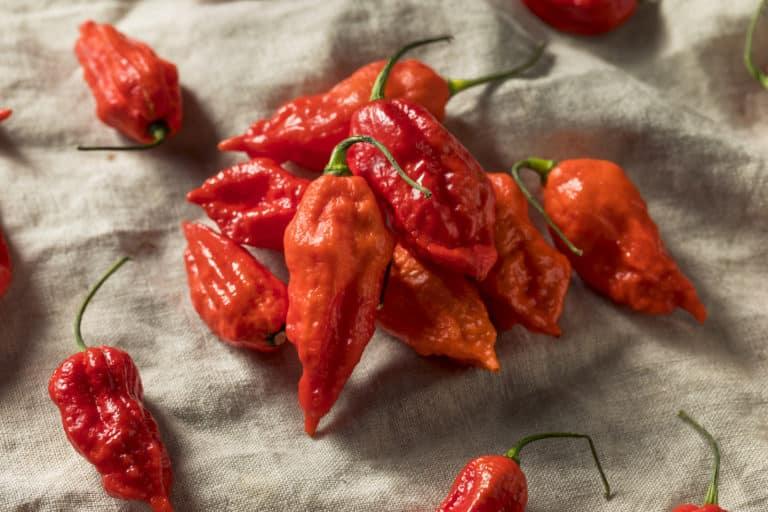 Ghost Pepper vs Jalapeno