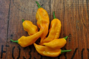 Fatalii Pepper: Quick Citrusy Heat