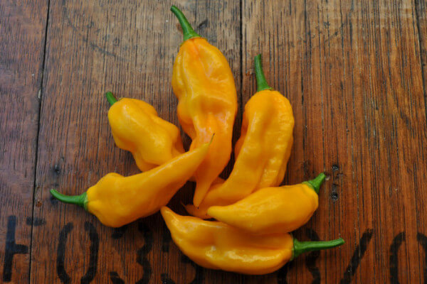 Fatalii Pepper: Quick Citrusy Heat