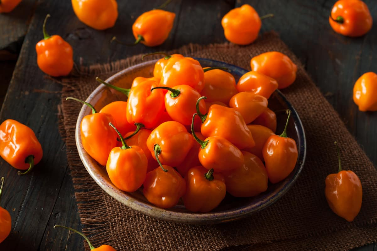 Cooking With Habanero Peppers: 5 Must-Follow Rules