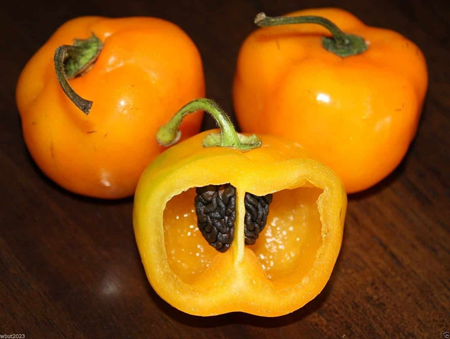 Manzano Pepper: The Apple Chili
