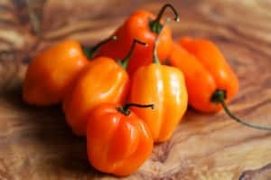 Habanero-Pepper-Plant-Very-Very-Hot-0
