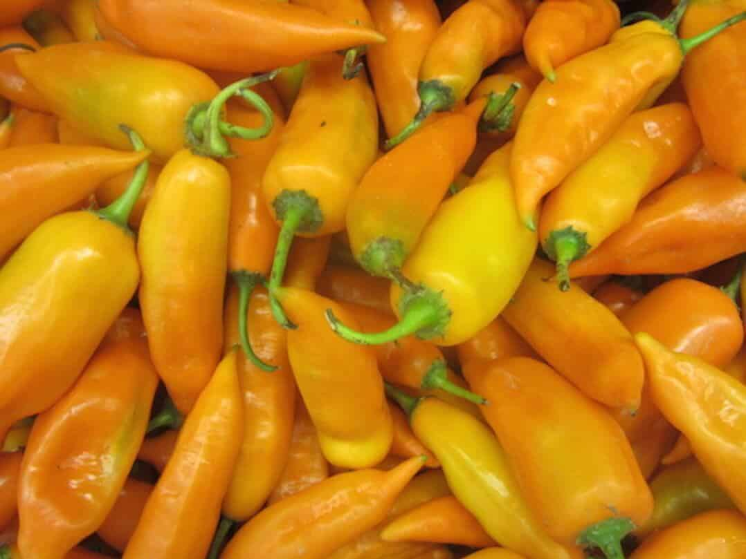 Aji Amarillo: Summer In Edible Form