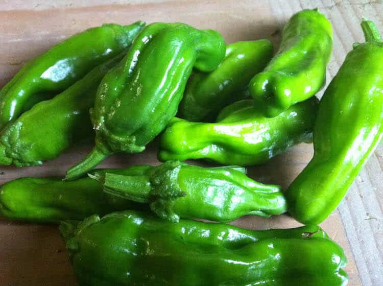 Shishito Peppers