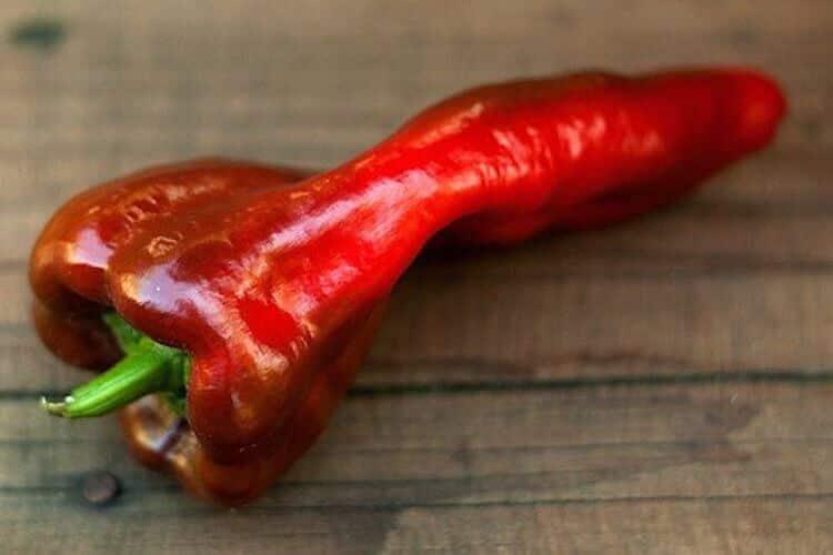Beaver Dam Pepper: Northern Spice