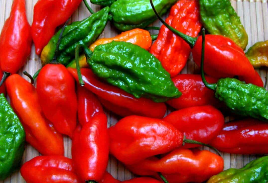 Cooking With Ghost Peppers: 7 Must-Follow Rules