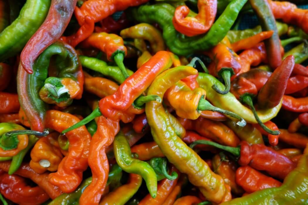 Italian Long Hot Peppers: Fryer's Delight