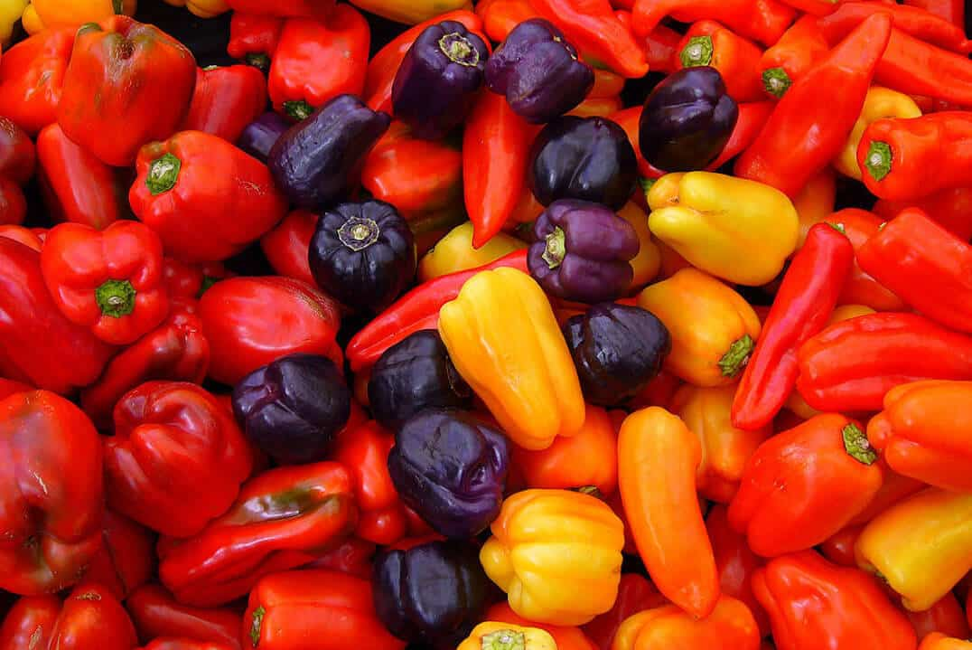 Capsicum Annuum: Common With Countless Variety