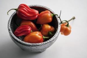 Capsicum Chinense