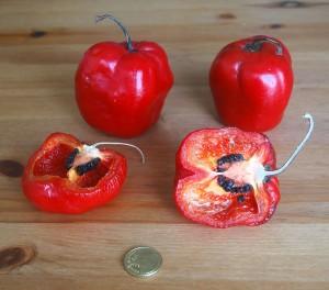 Capsicum Pubescens (Rocoto Pepper)