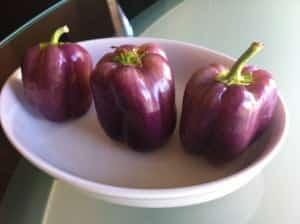 Purple Beauty Pepper: A Royal Bell