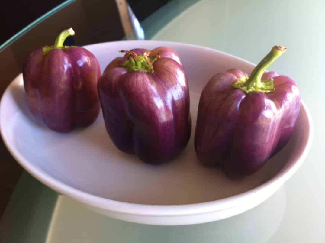 Purple Beauty Pepper: A Royal Bell
