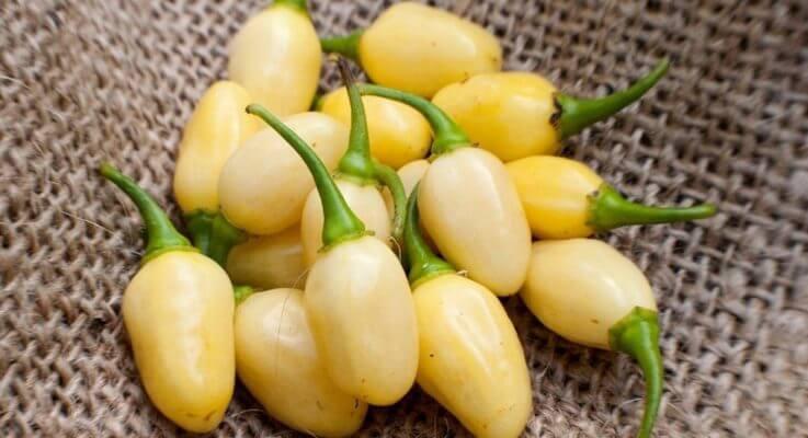 White Peppers Guide: From Cream To Cornsilk