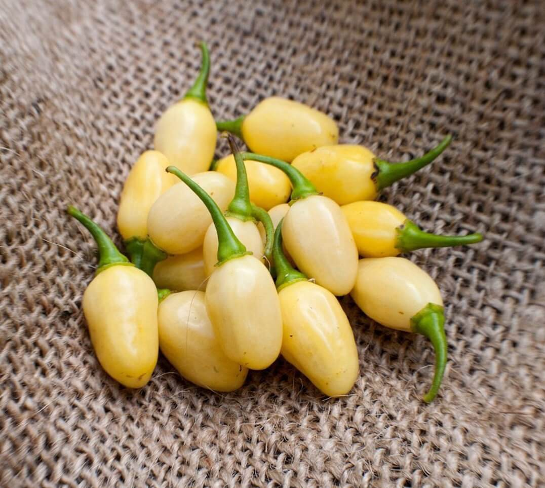 Peruvian White Habanero: Mean Bean