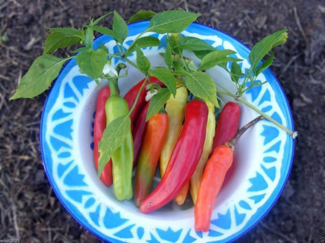 Charleston Hot Pepper: Cayenne Made Bold