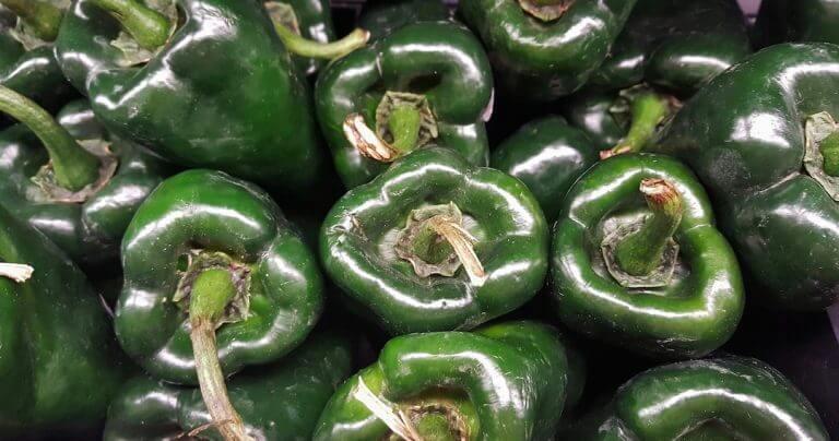 Poblano Pepper Planting