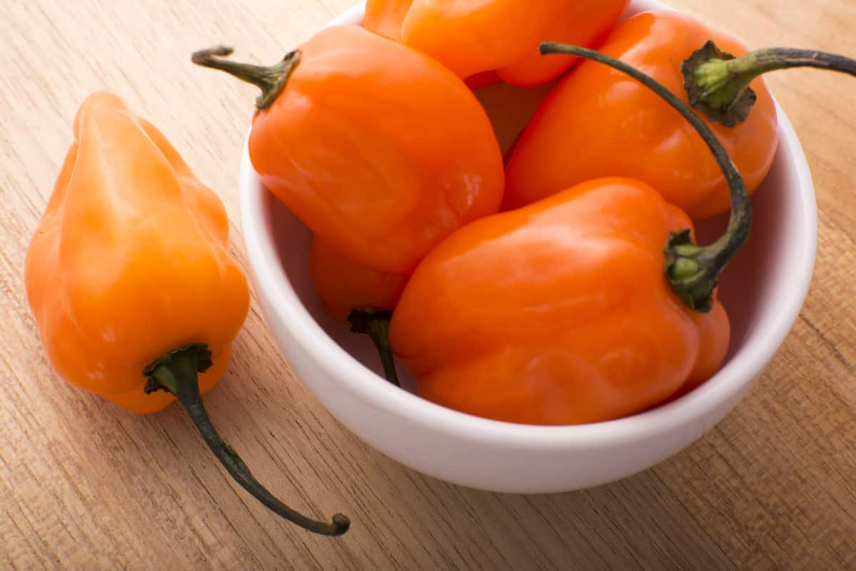 Habanero Nutrition: How Healthy Are They?