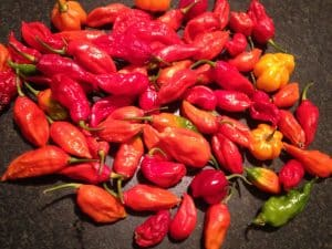 Ghost Pepper Nutrition: How Healthy Are They?