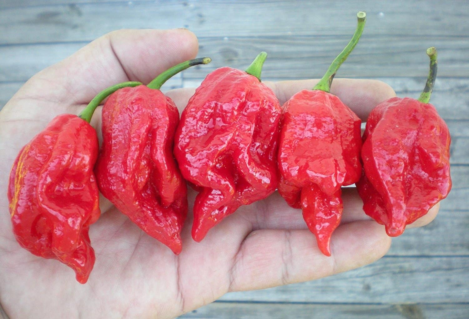 7 Pot Barrackpore: Big Spice