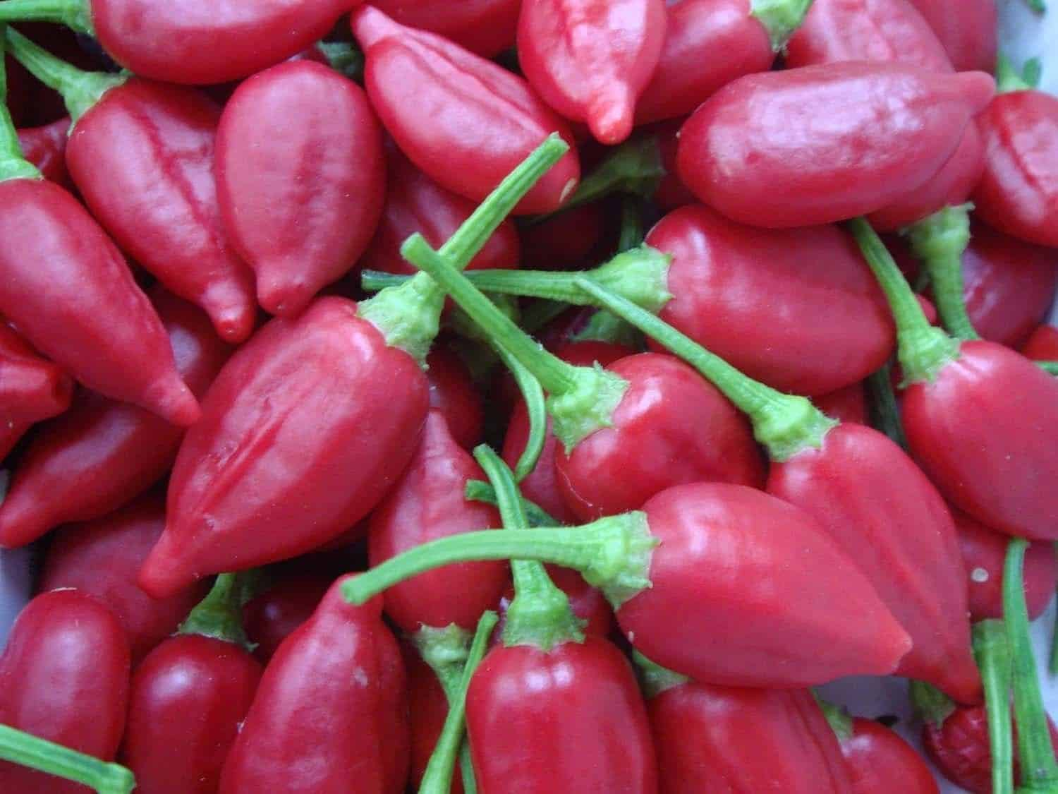 Inca Red Drop pepper