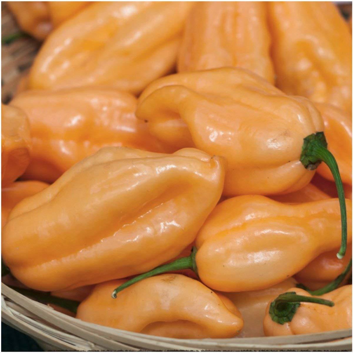 Peach Habanero: Sweet Looks