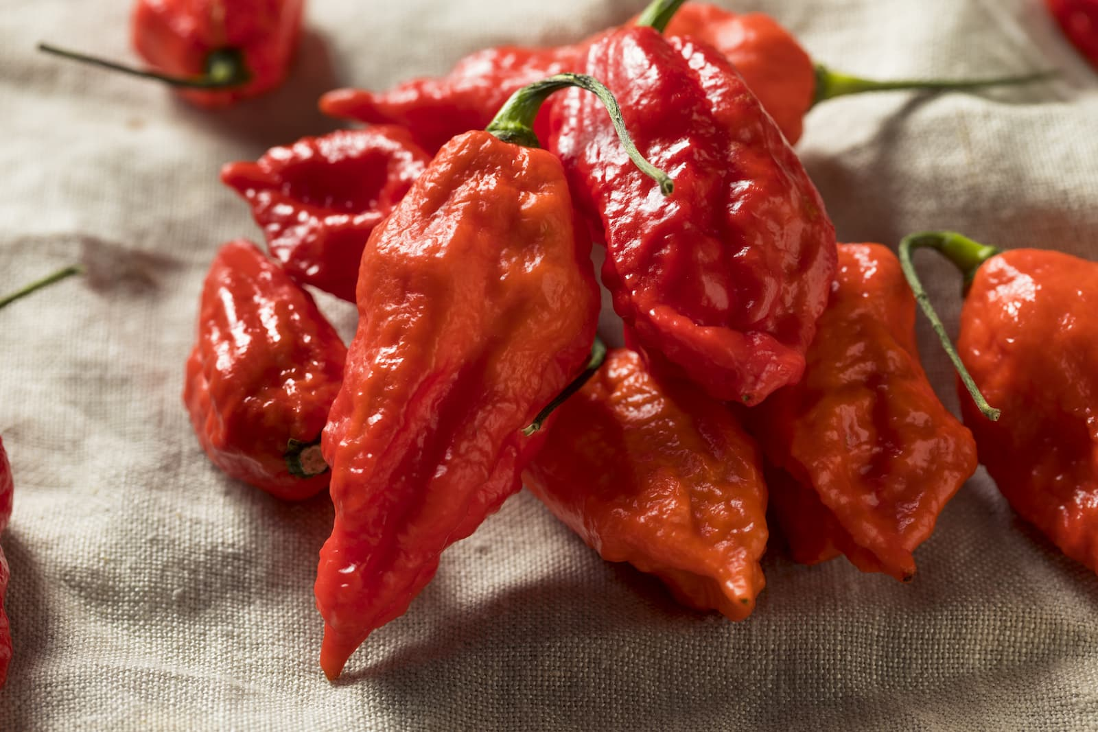 Buy Ghost Pepper Powder – Fruity, Citrusy, Super-Hot
