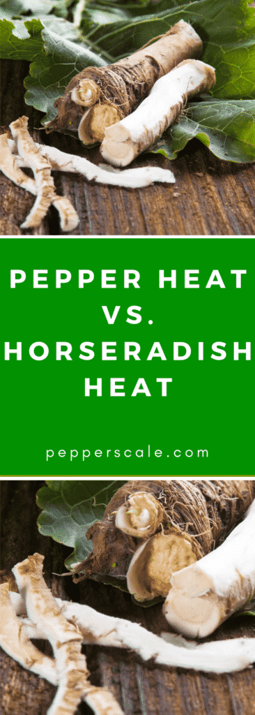 Pepper Heat V Horseradish Heat