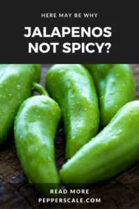 Jalapenos Not Spicy Pin